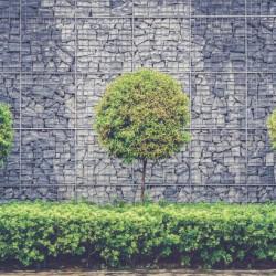 Tree-Trio-730x410